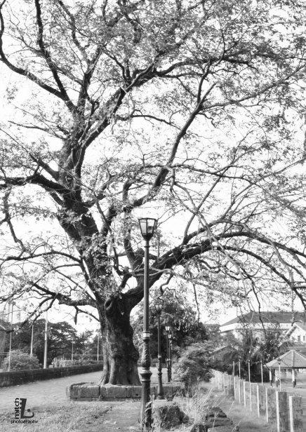 trees along the walls